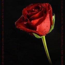 Amante para mujeres...
